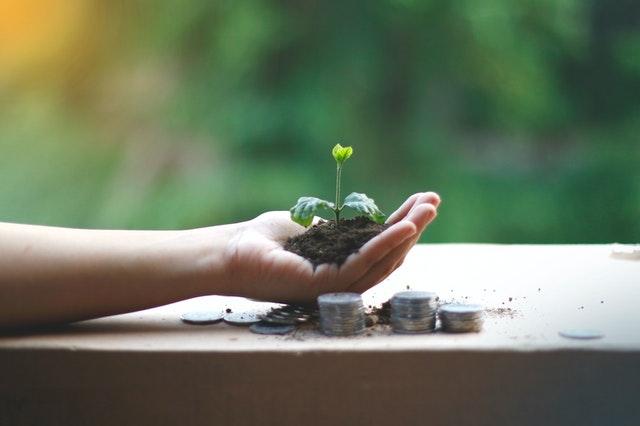 Ręka z ziemią i rosnącą rośliną